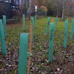 Aktion Bäumepflanzen Ergebnis